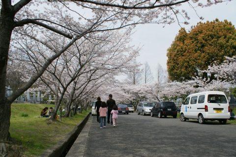 岸和田市墓苑のお花見