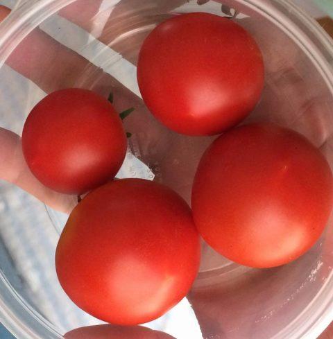ダイソーの中玉トマト